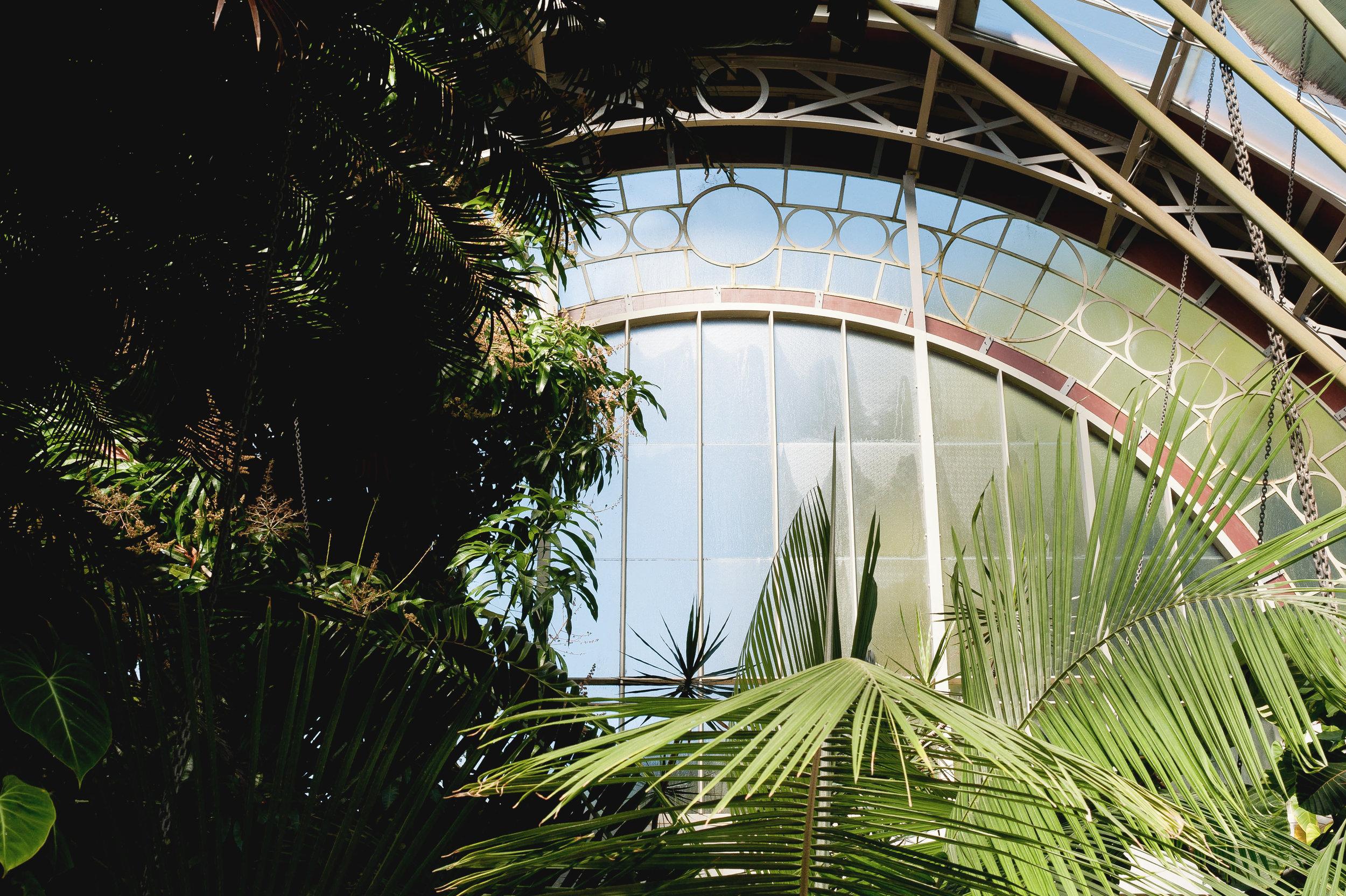 Auckland 06-09-9642.jpg