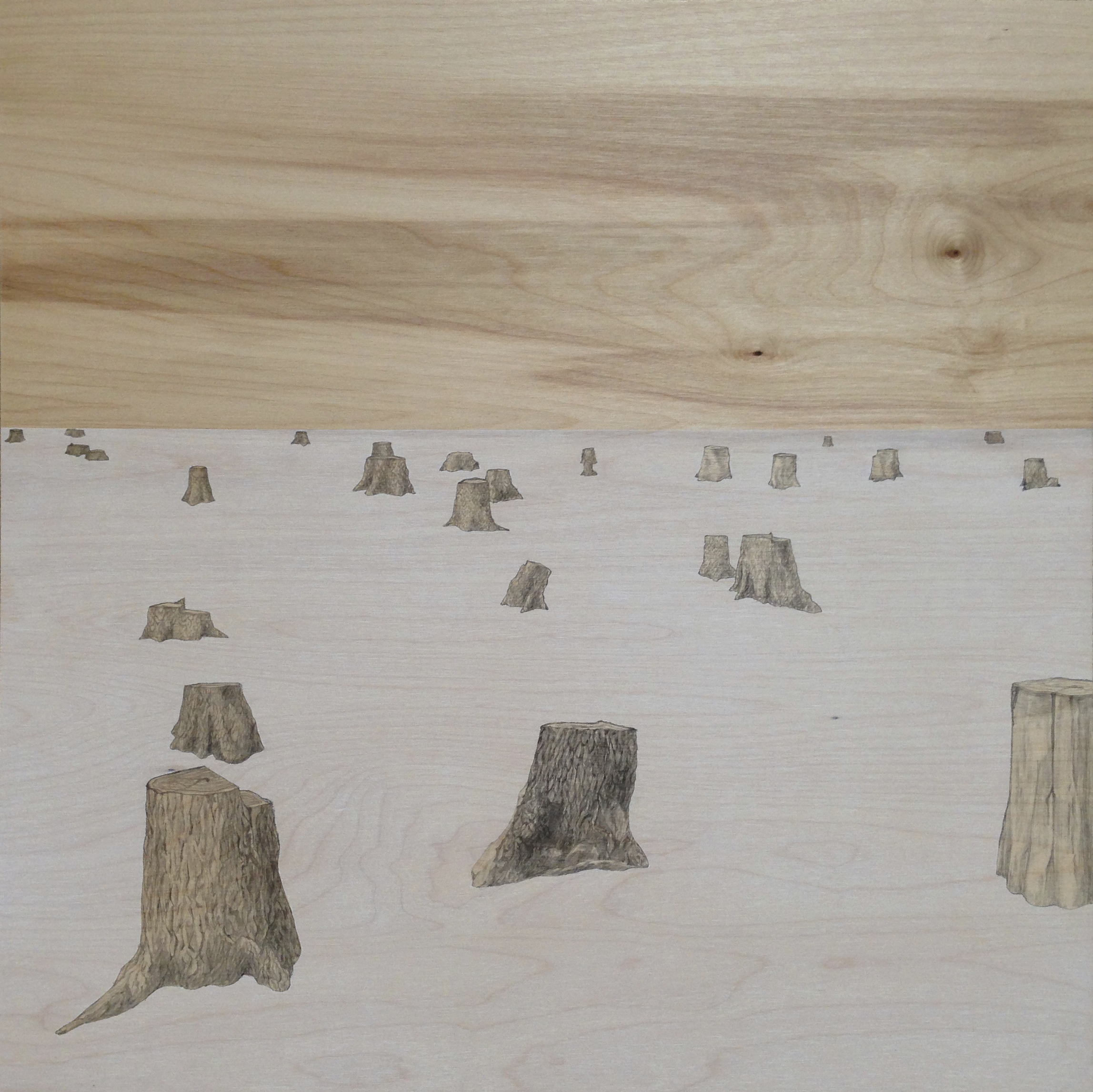Untitled (stumps) / graphite and stain on birch panel