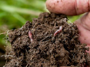 Healthy soil full of beneficial microbes