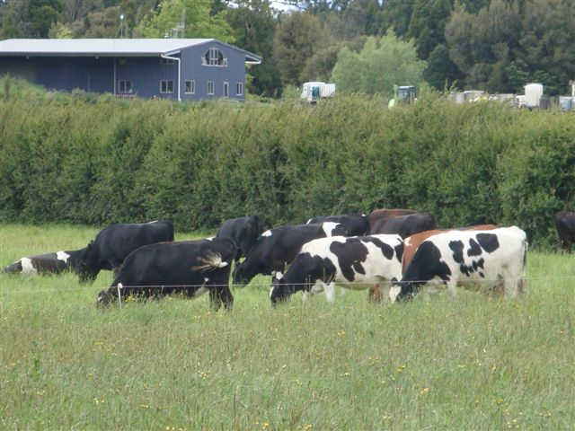 Healthy pastures, healthy animals