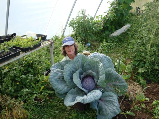 Jenny's organic produce