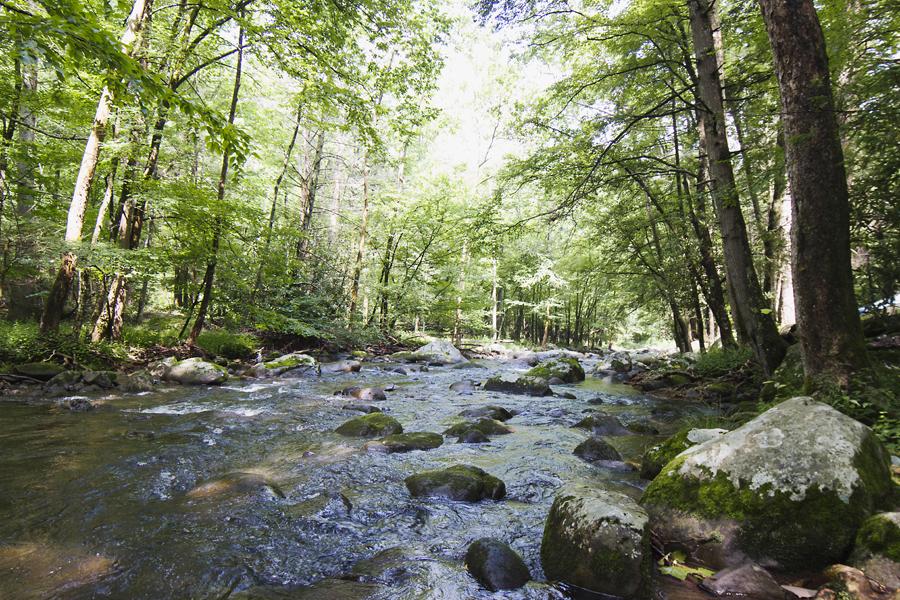 Tennessee9.jpg