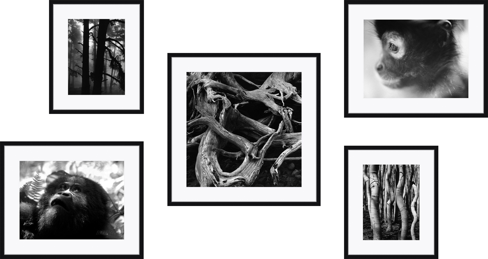 Artist Credit:  Brett Weston ,  Beverly Joubert ,  Henry Horenstein    Framing Credit:  Framebridge