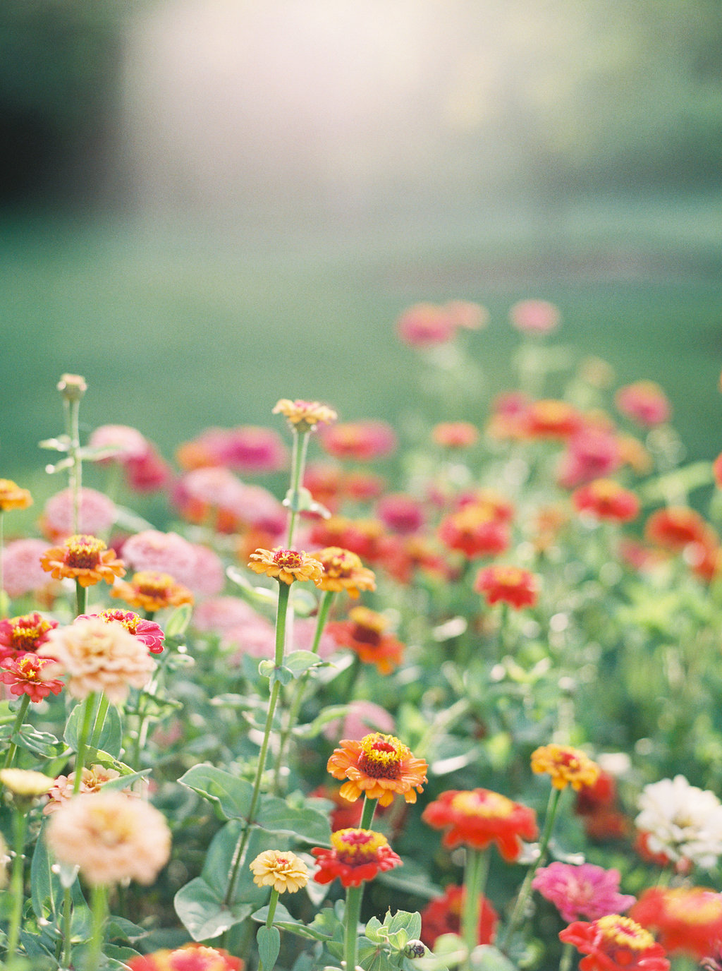 alegria-by-design-wedding-planner-planning-event-design-santa-barbara-day-of-coordinator-kestrel-park-santa-ynez-fields-castle-lavender-garden-mrs-box (32).jpg