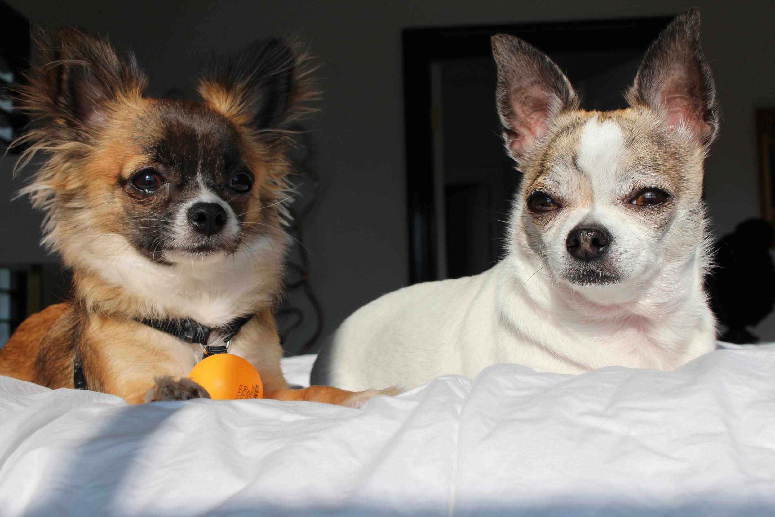 Frankie and Chiefy
