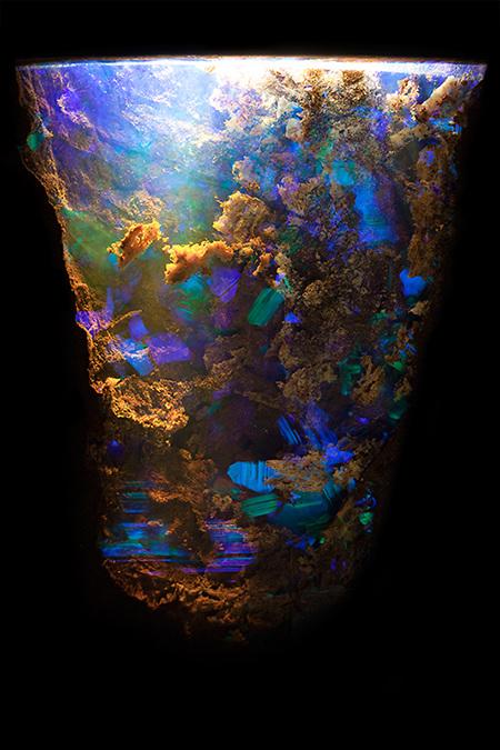 Opal in ironstone by @mineralien Queensland, Australia Field of View = 9.00mm • Depth of Field = 4.0mm