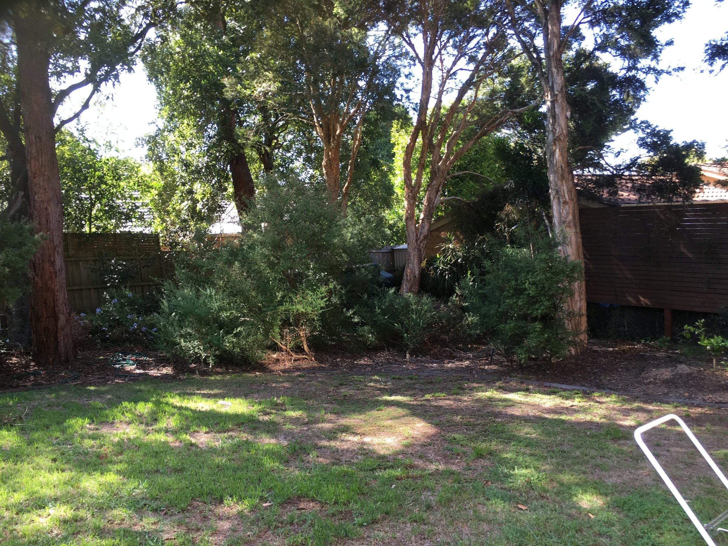 BEFORE: The rear corner of the garden had a lot of scrubby, overgrown shrubs that took up a lot of space and fought with the lawn for sunlight.