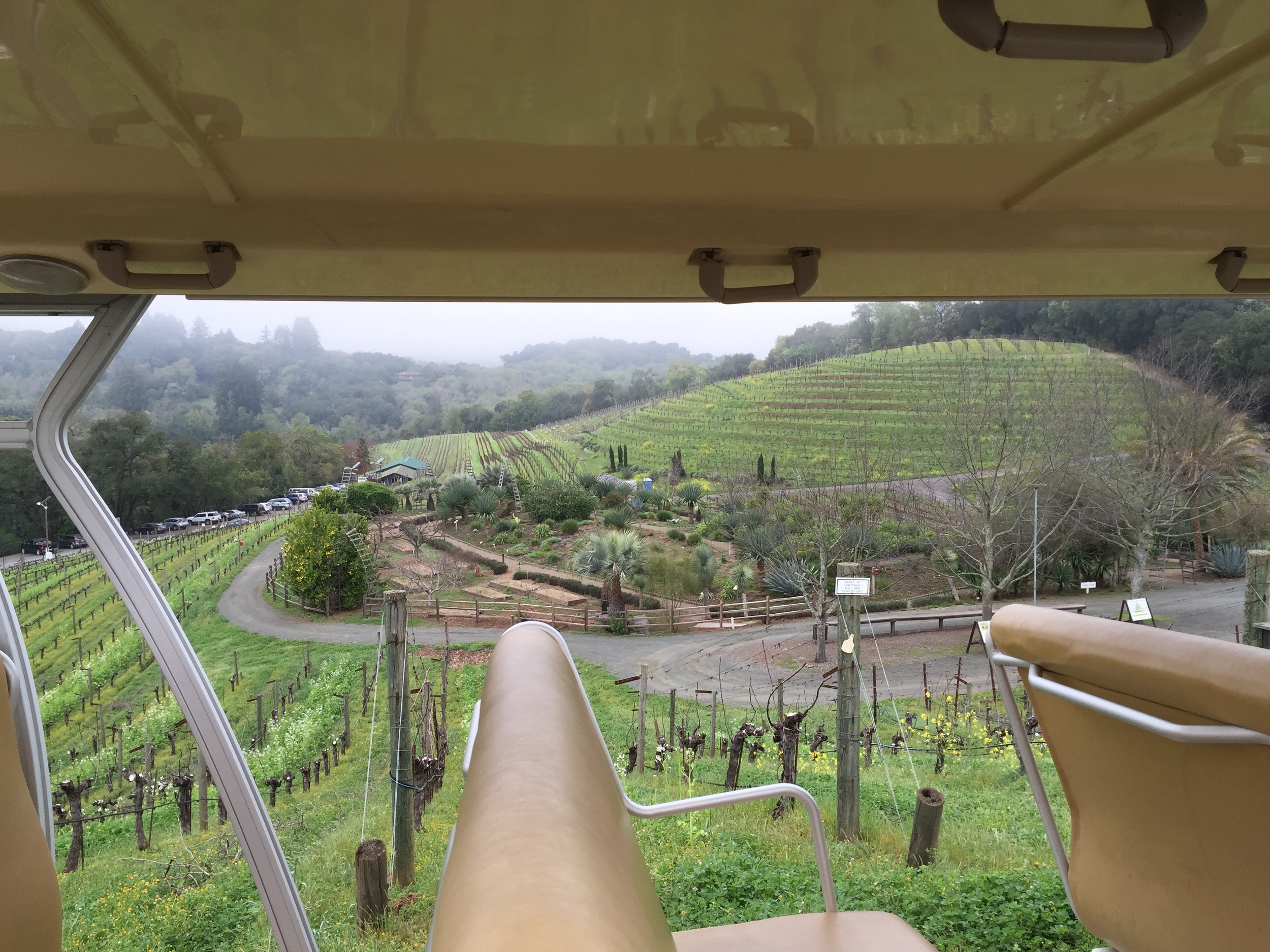A view of the winery from the trolly car. (Emi Kolawole)