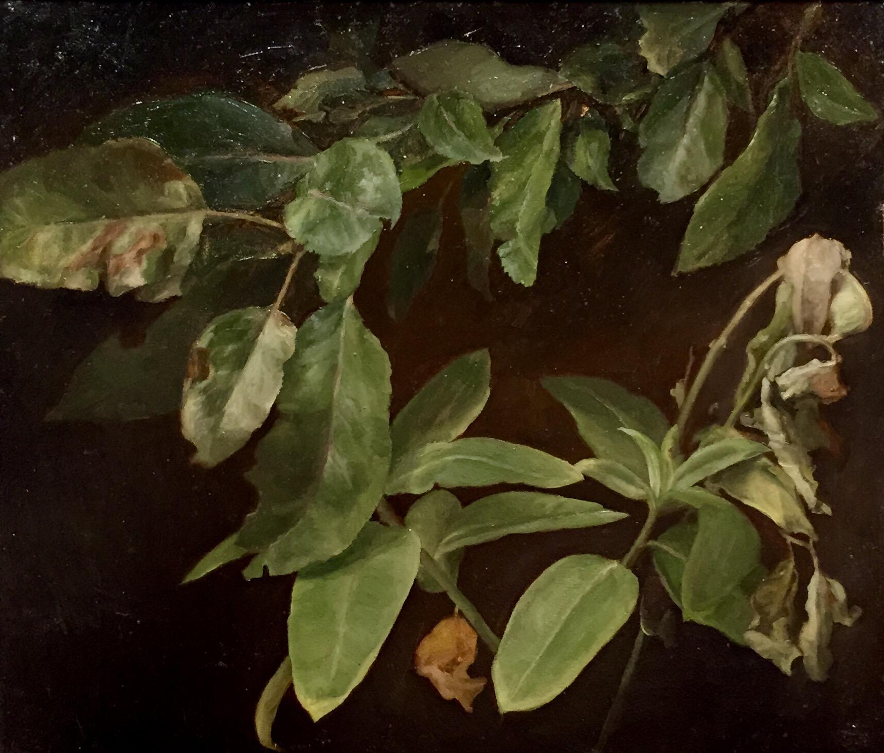 Milkweed Apple
