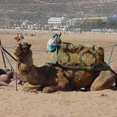 February 12, 2001- Beach Resort - Agadir, Morocco - At the Beach