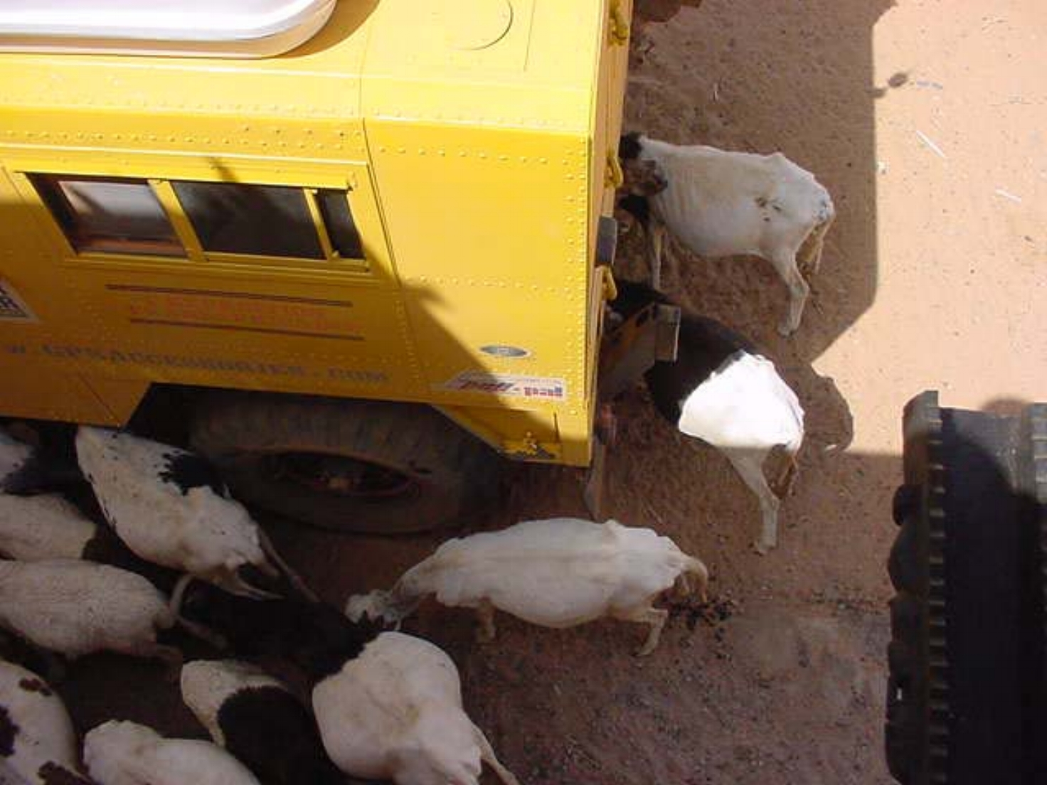 The Dogon animals sure seem to like our Land Rover Forward Control