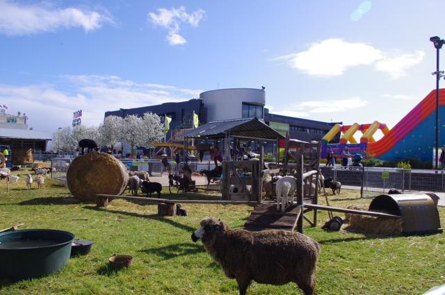 The Animal Farmyard