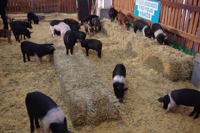 Pat a pig at the Farmhouse