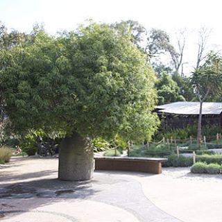 Ian Potter Garden Botanical Gardens Melbourne