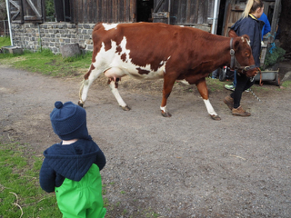 collingwoodchildrenfarmfamilyday.jpg