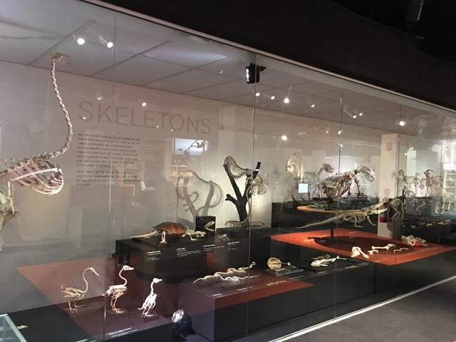 australianmuseum03.jpg