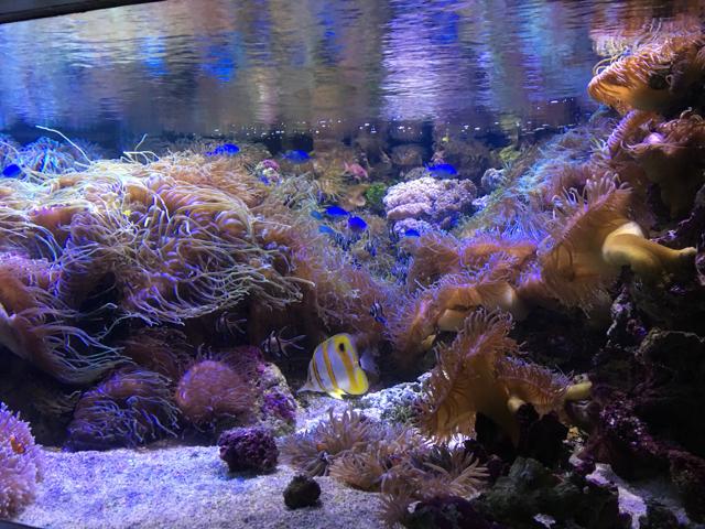 sealifesydneyaquarium07.jpg