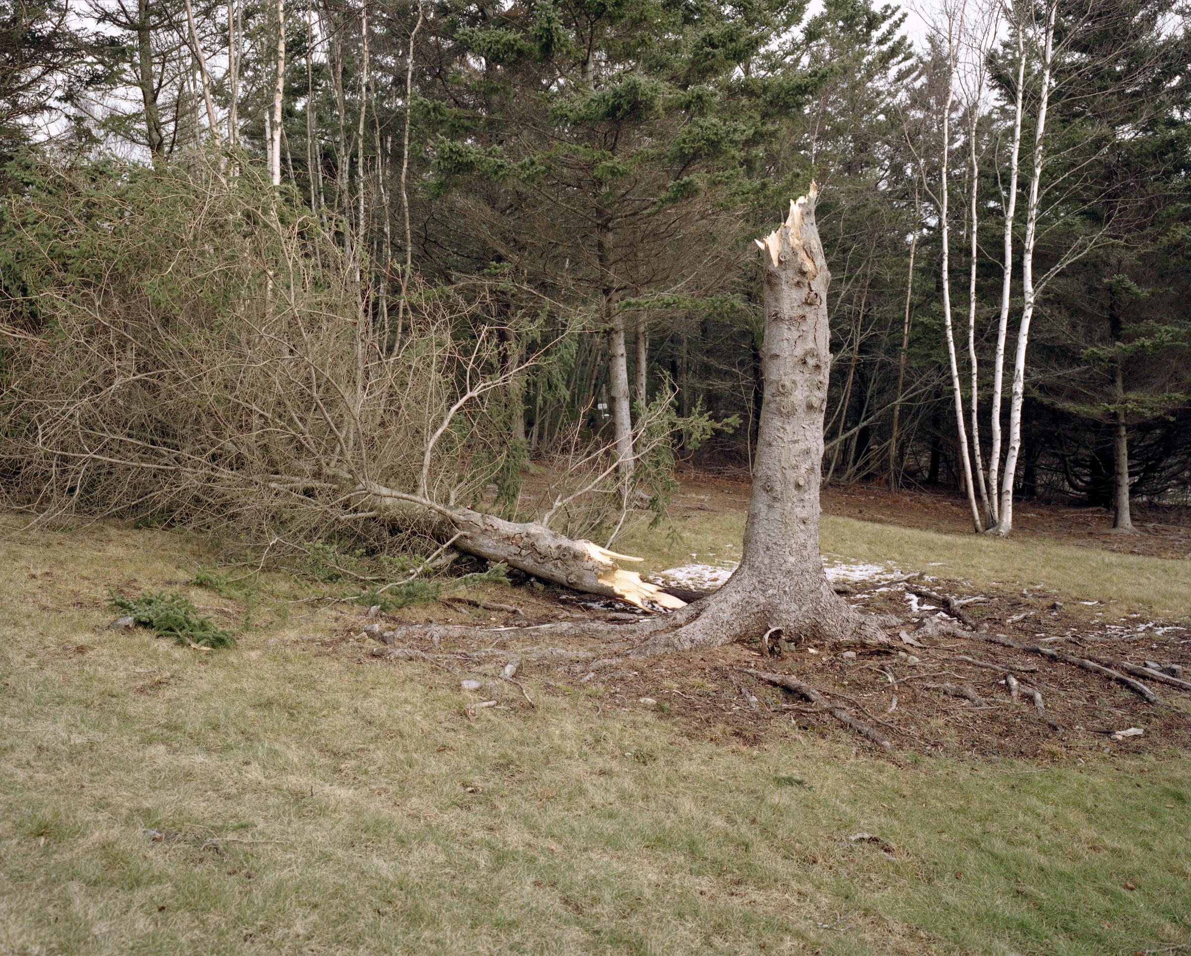 Broken Tree.jpg