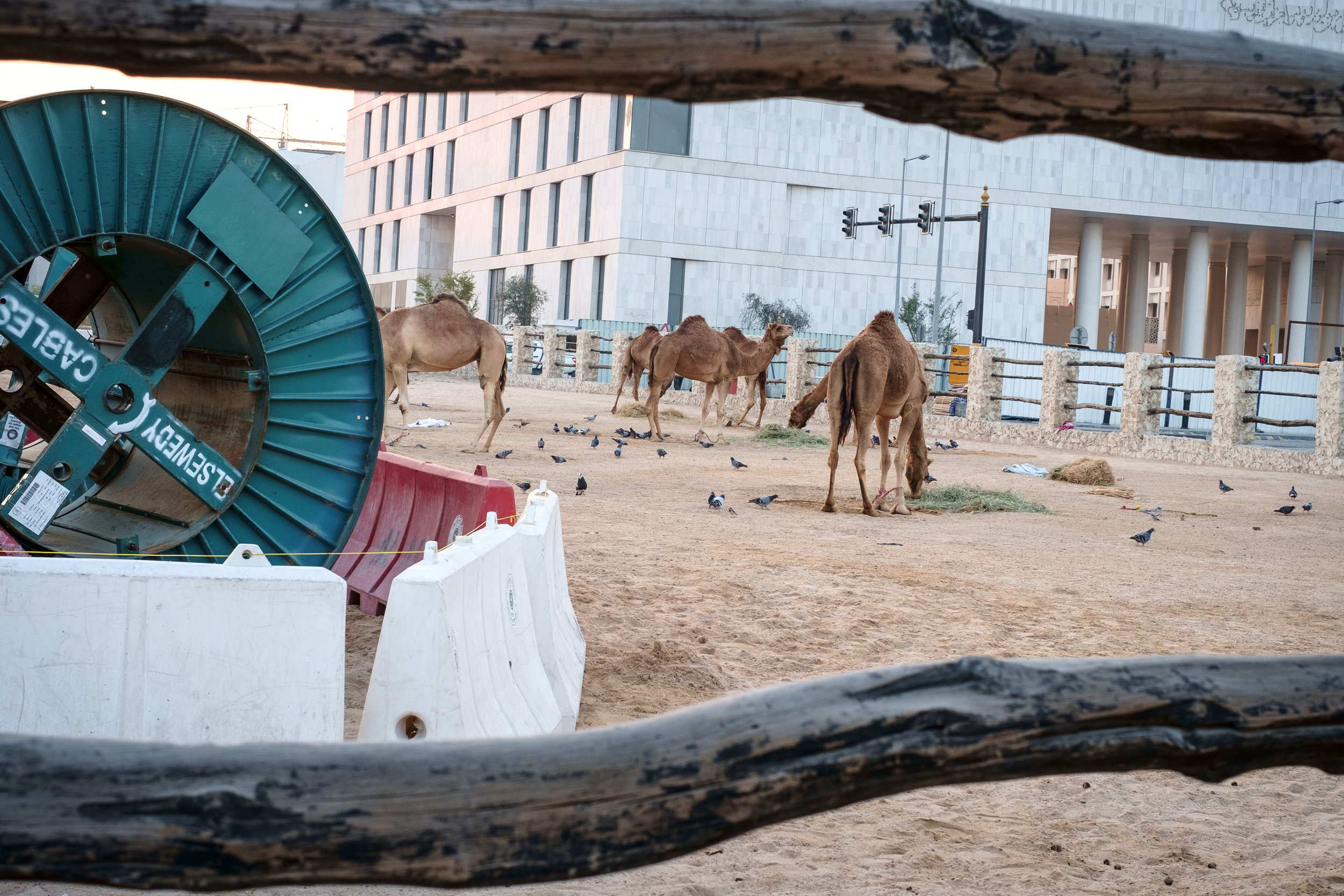 Part construction scene, part camel pen at Souq Waqif in Doha. Qatar is in a race to revitalize and modernize in time to host the 2022 FIFA World Cup.
