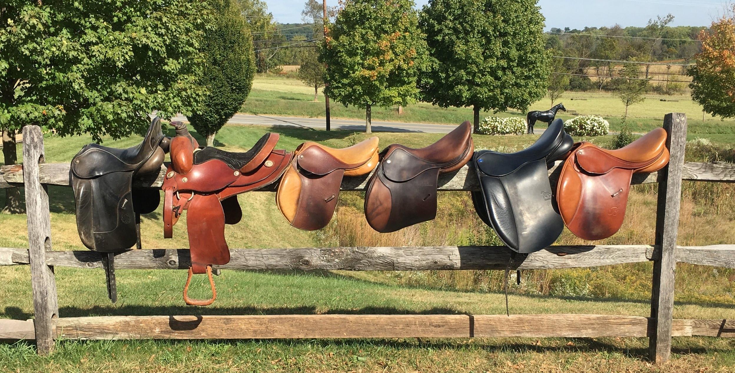2017 Fall Saddles.jpg