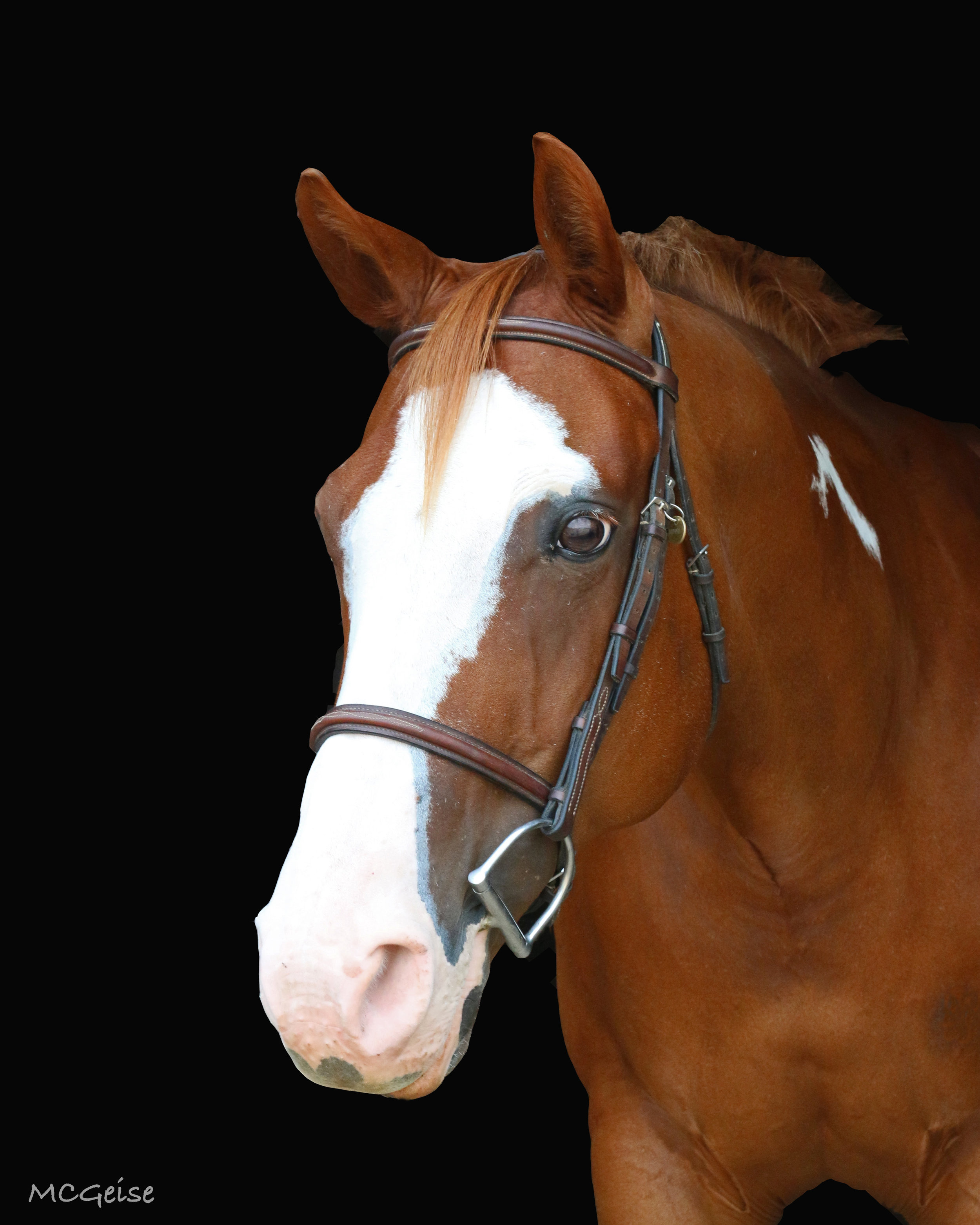 Birthday: 4/10/04 Breed: Paint Mare Color: Sorrel Height: 15 hands Discipline: Pleasure Show Name: Invited to the Party