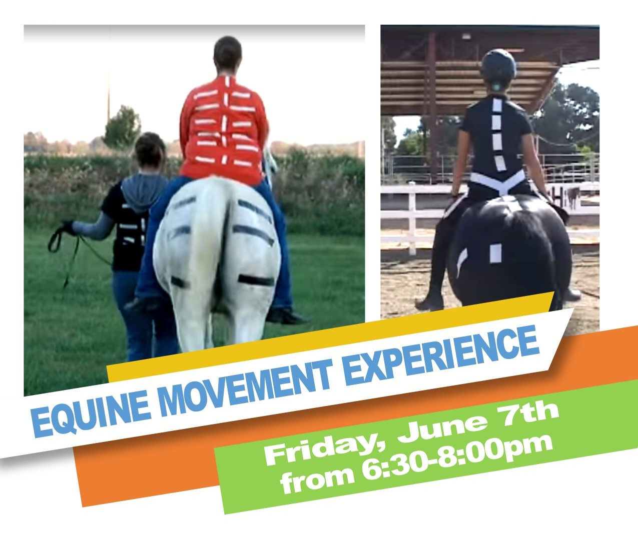 Equine Movement Experience -image.jpg
