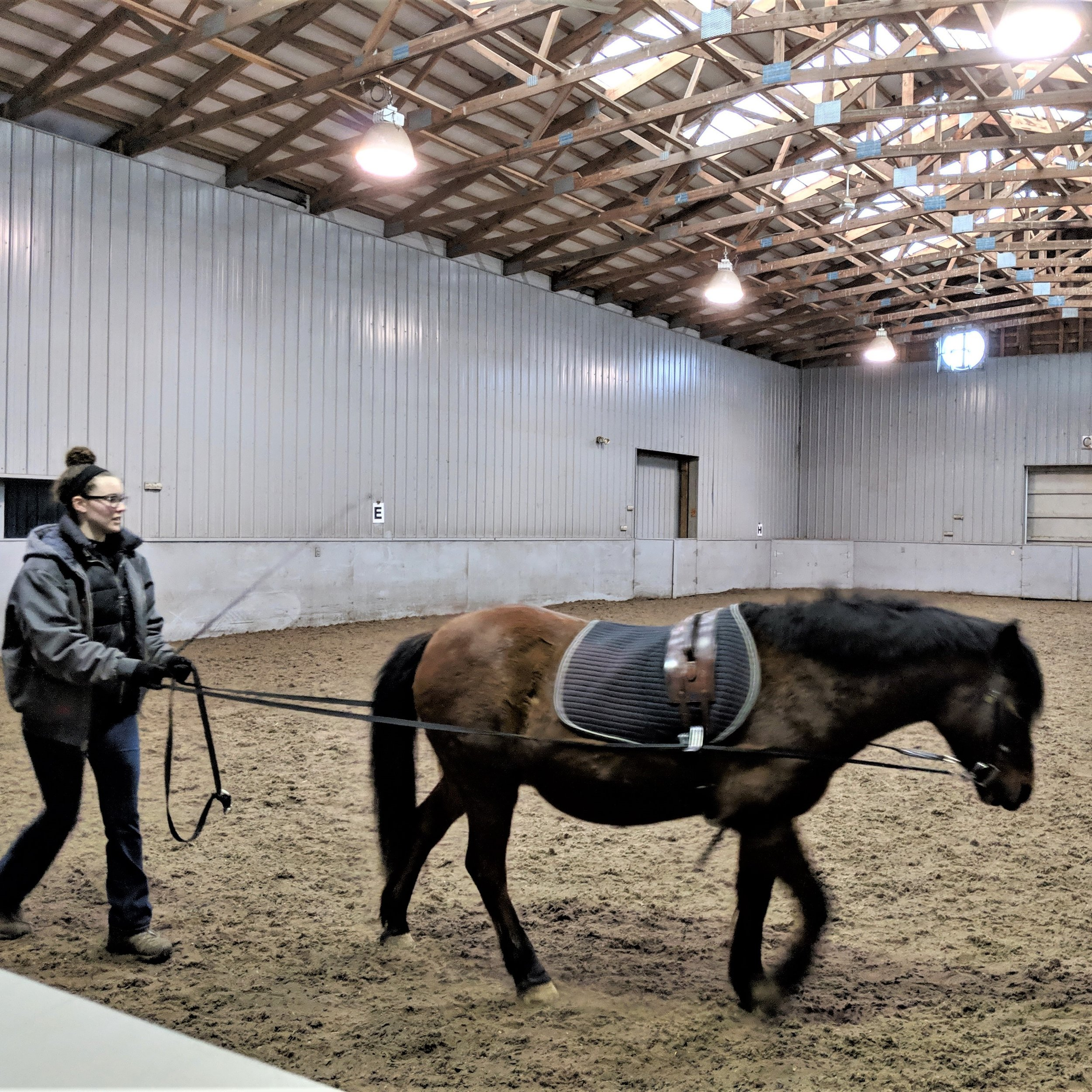"""I was really impressed at how quickly Sam picked up long-lining! From the very begining I could immediately tell she had extensive horse knowledge, she quietly listened to everything and seemed to absorb it all. I even showed her a technique that I have never taught anyone else here at Mane Stream which she then replicated on the first try. IT BLEW ME AWAY!""   Dan O'Donnell, Long-time Volunteer & Long-lining Master"