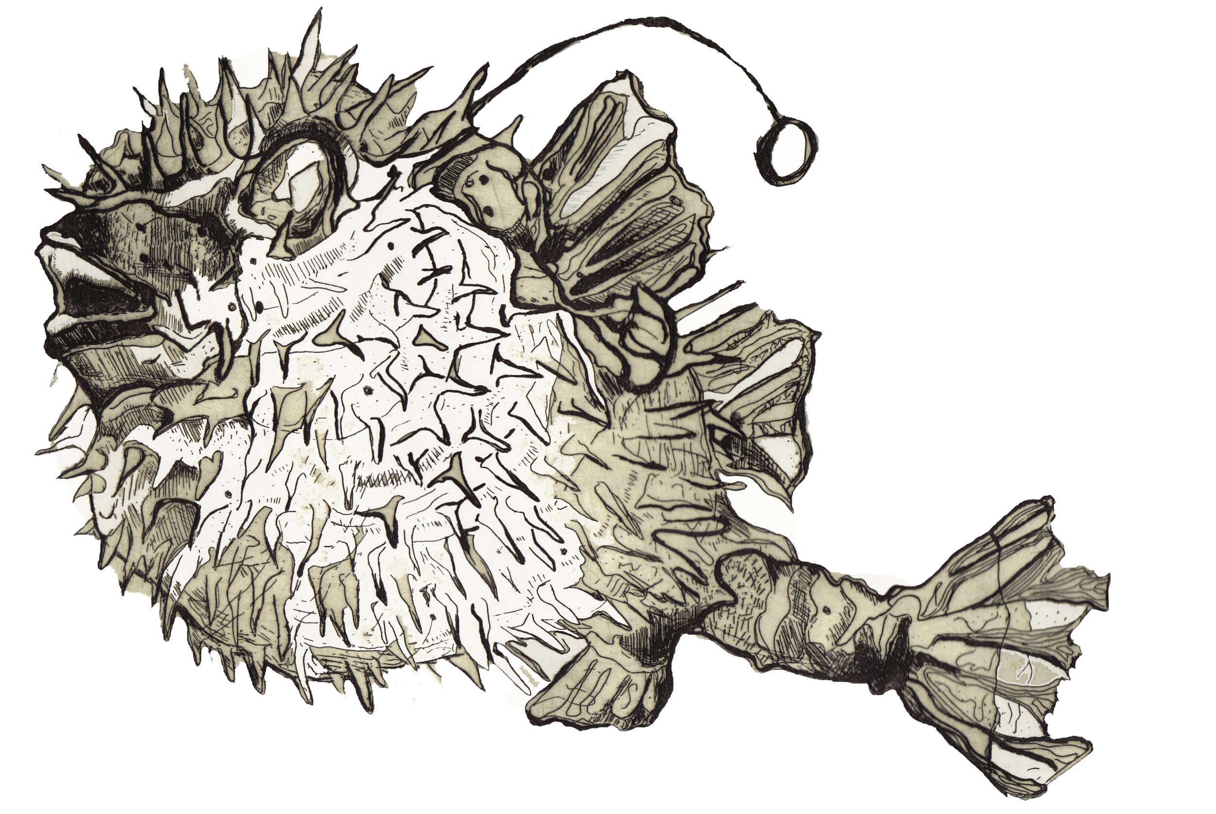 SingleBlowfish1 (1).jpg