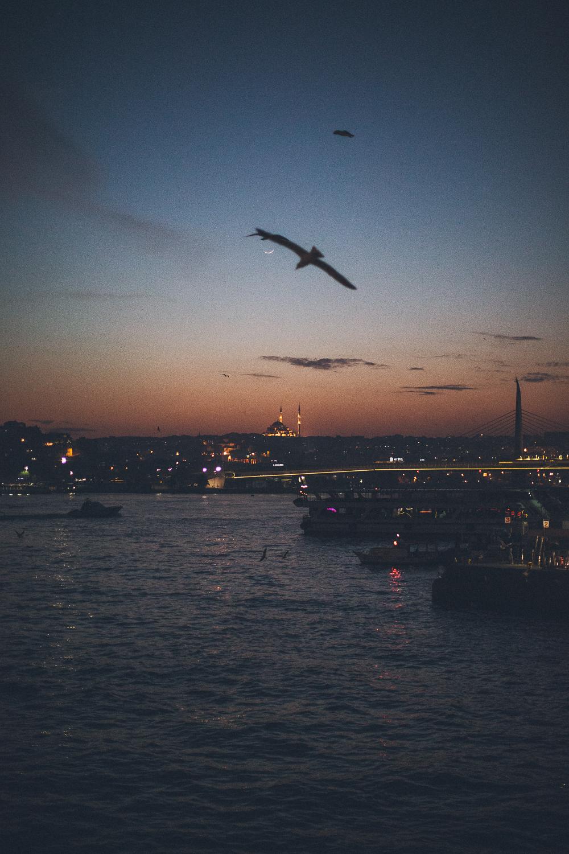 Istanbul-BD-www.celinehamelin.com-2751.jpg