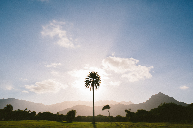 1-oahu-Hawaii2014-10A0408.jpg