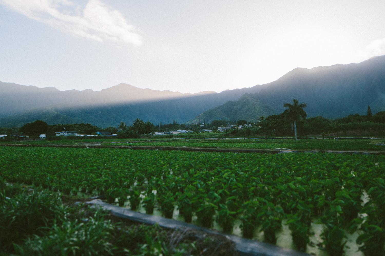 1-oahu-Hawaii2014-10A0434.jpg