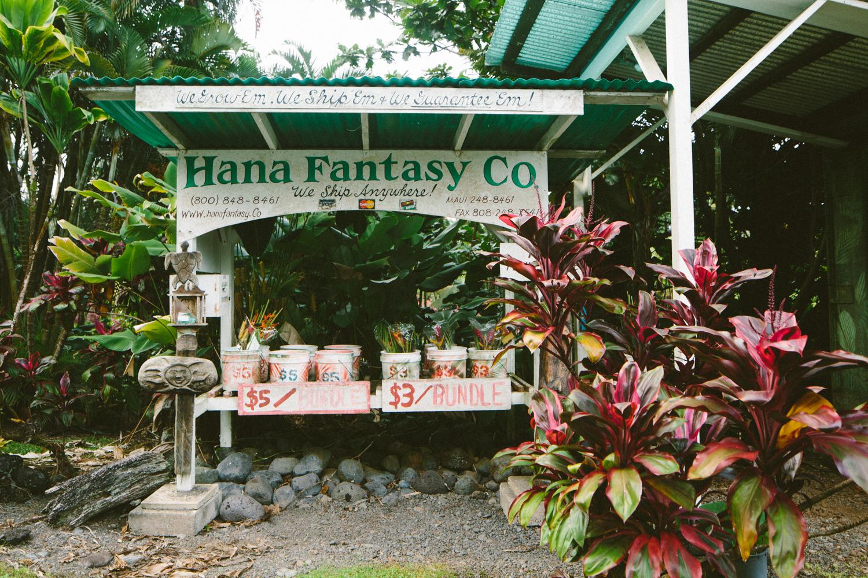 2-maui-Hawaii2014-10ED14982-maui-.jpg