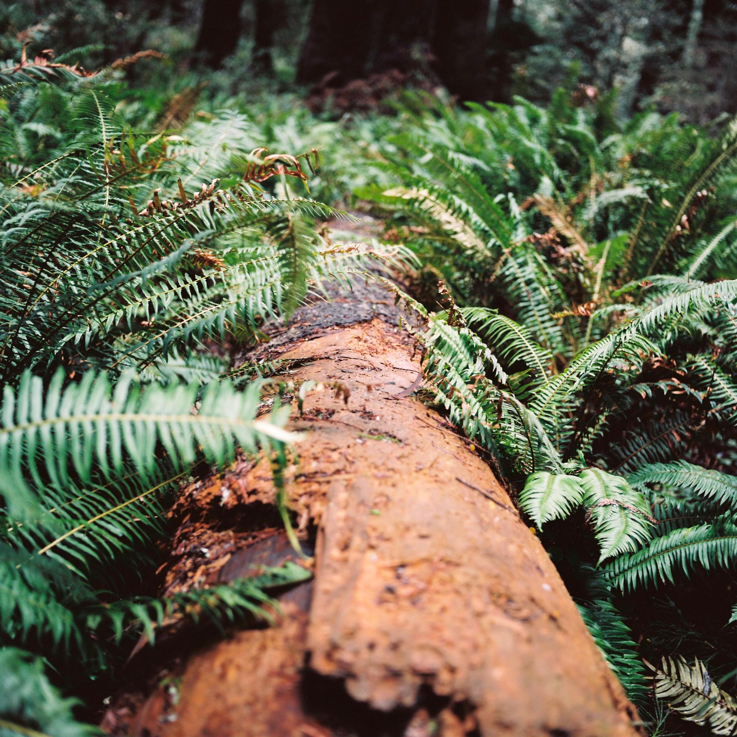 10-Redwoods-P160CelineHamelin_OregonRoadtrip-73.jpg
