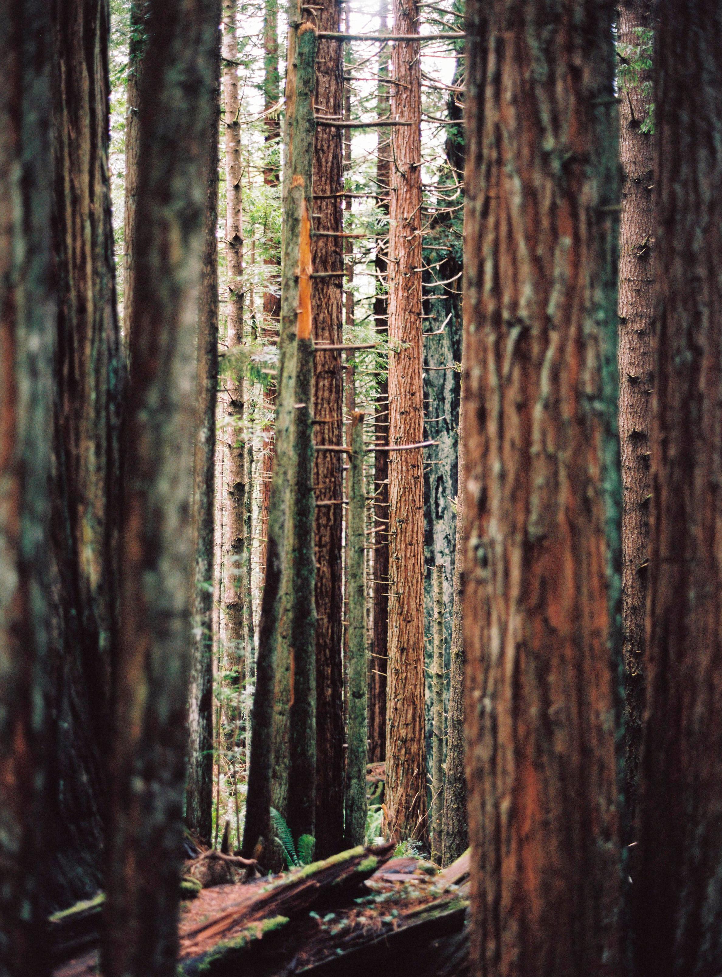 11-Redwoods-P400CelineHamelin_OregonRoadtrip-171.jpg
