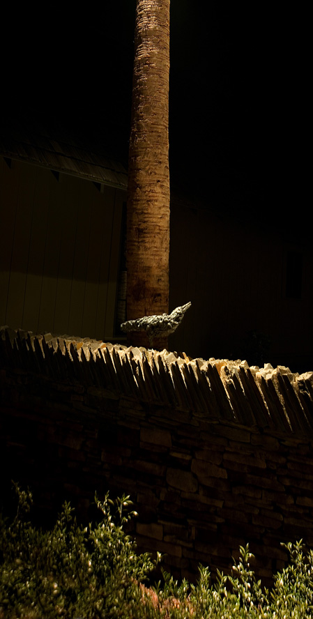 hickmanone-light-source-crow.jpg