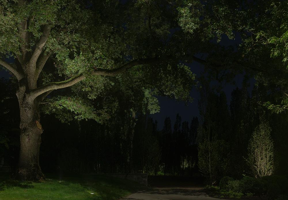 oak-tree-west-chester-landscape-lighting.jpg