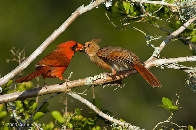 Fledgling Romance: Why Some Birds Feed Their Mates