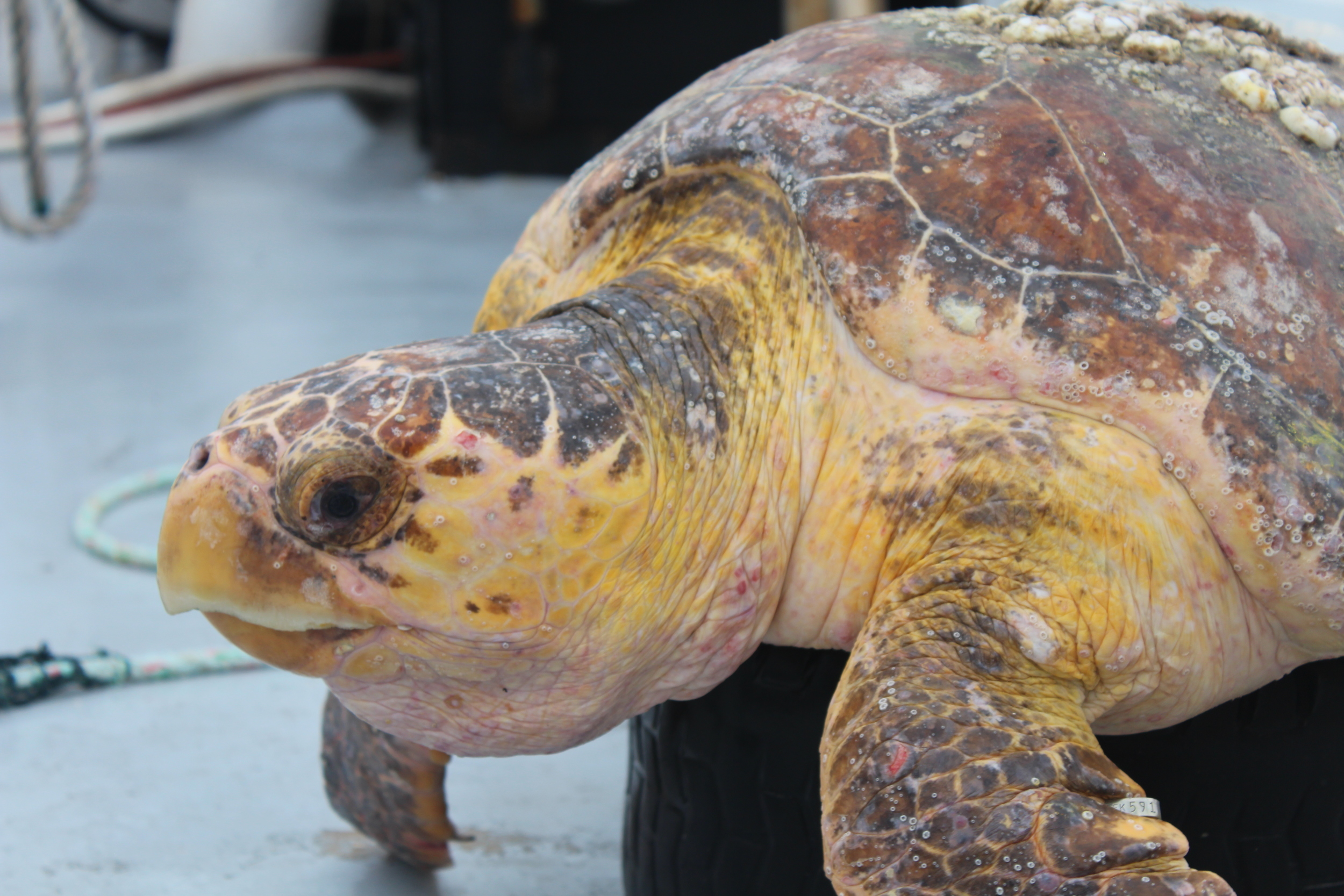 The Sea Turtle Cruise