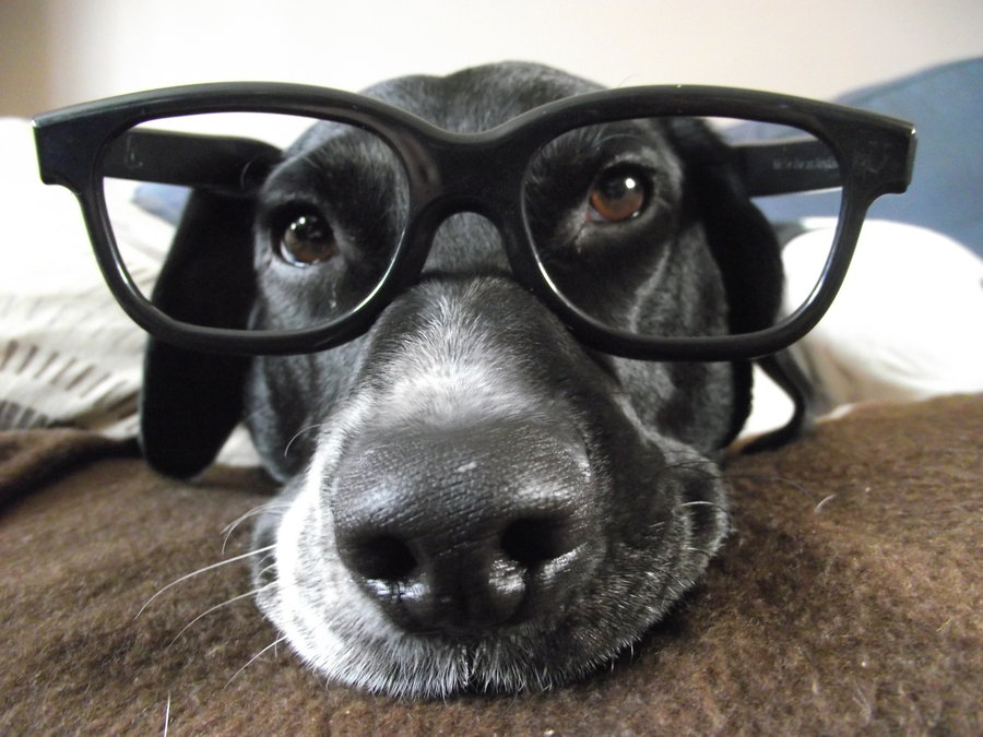 funny-dog-with-glasses_1.jpg