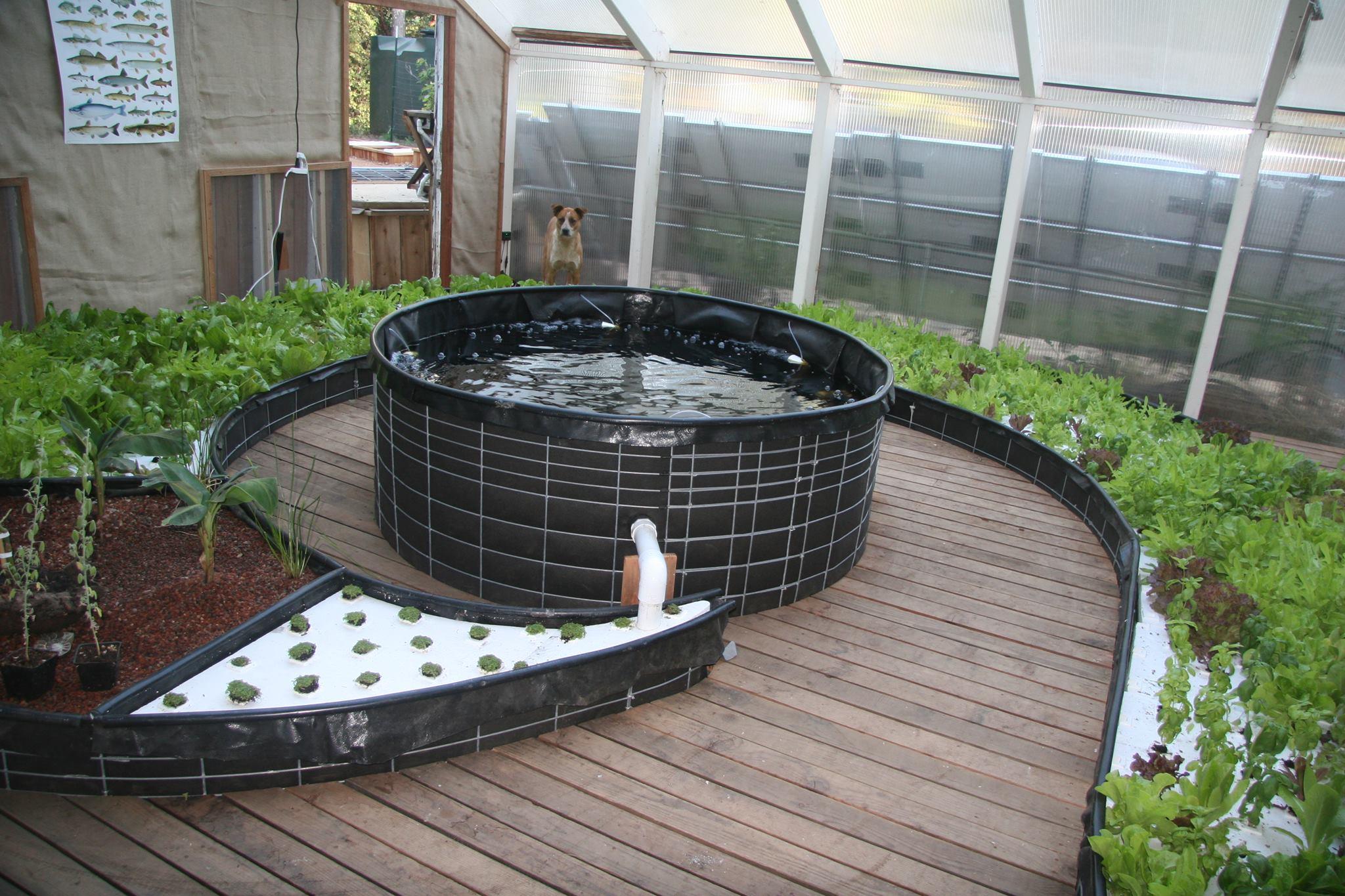 Aquaponia de jardín.Proyectos de innovación social en Hub Fuerteventura