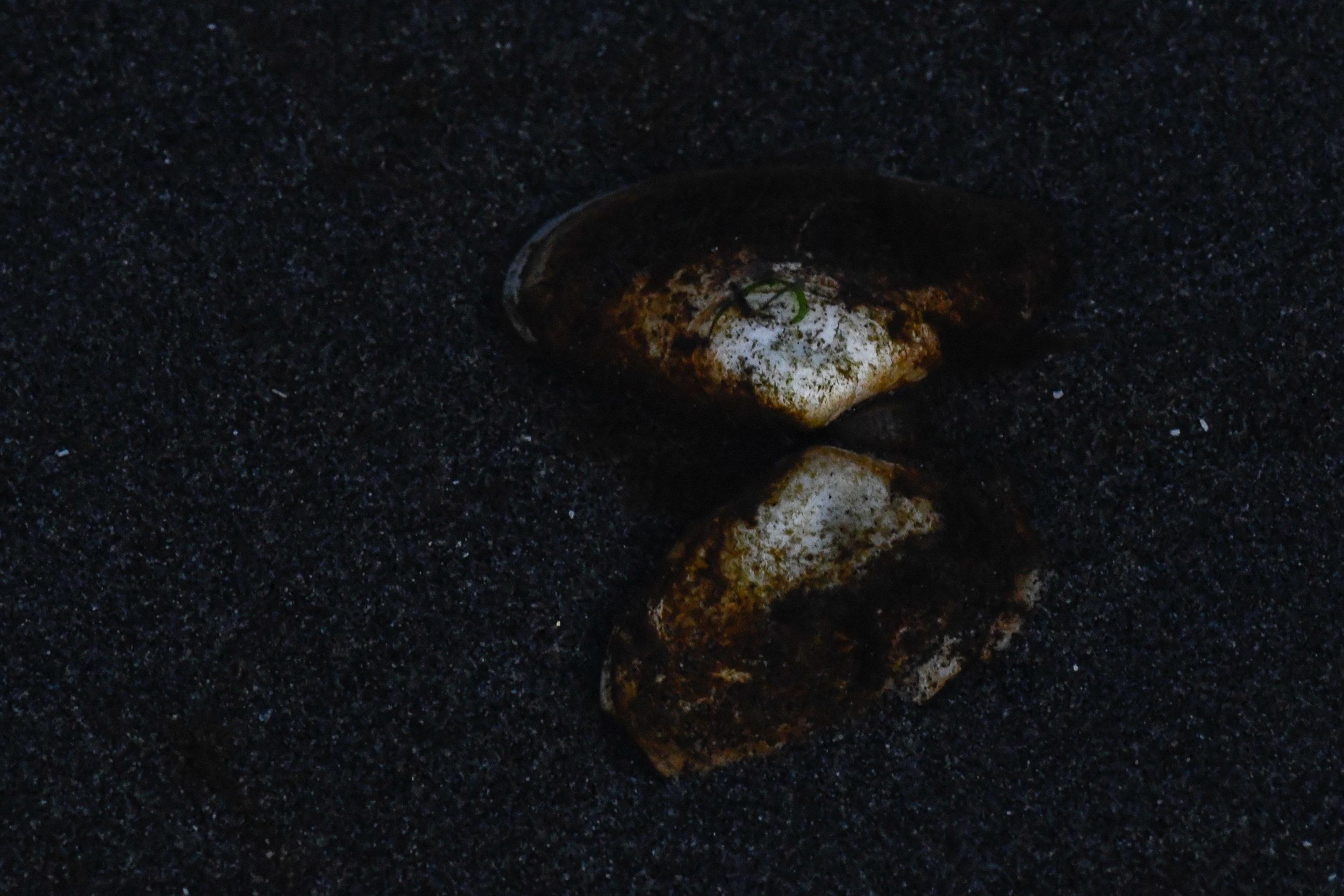 Underwater Shell, Port Townsend, 2018