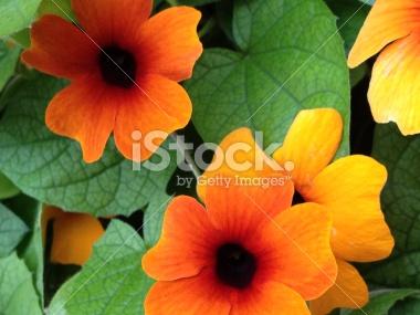honeycutt_photo_sample_1.jpg