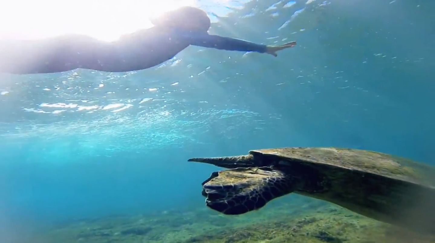 A-Honu-Experience-The-Sea-Appreciation-Project-by-Leah-Dawson