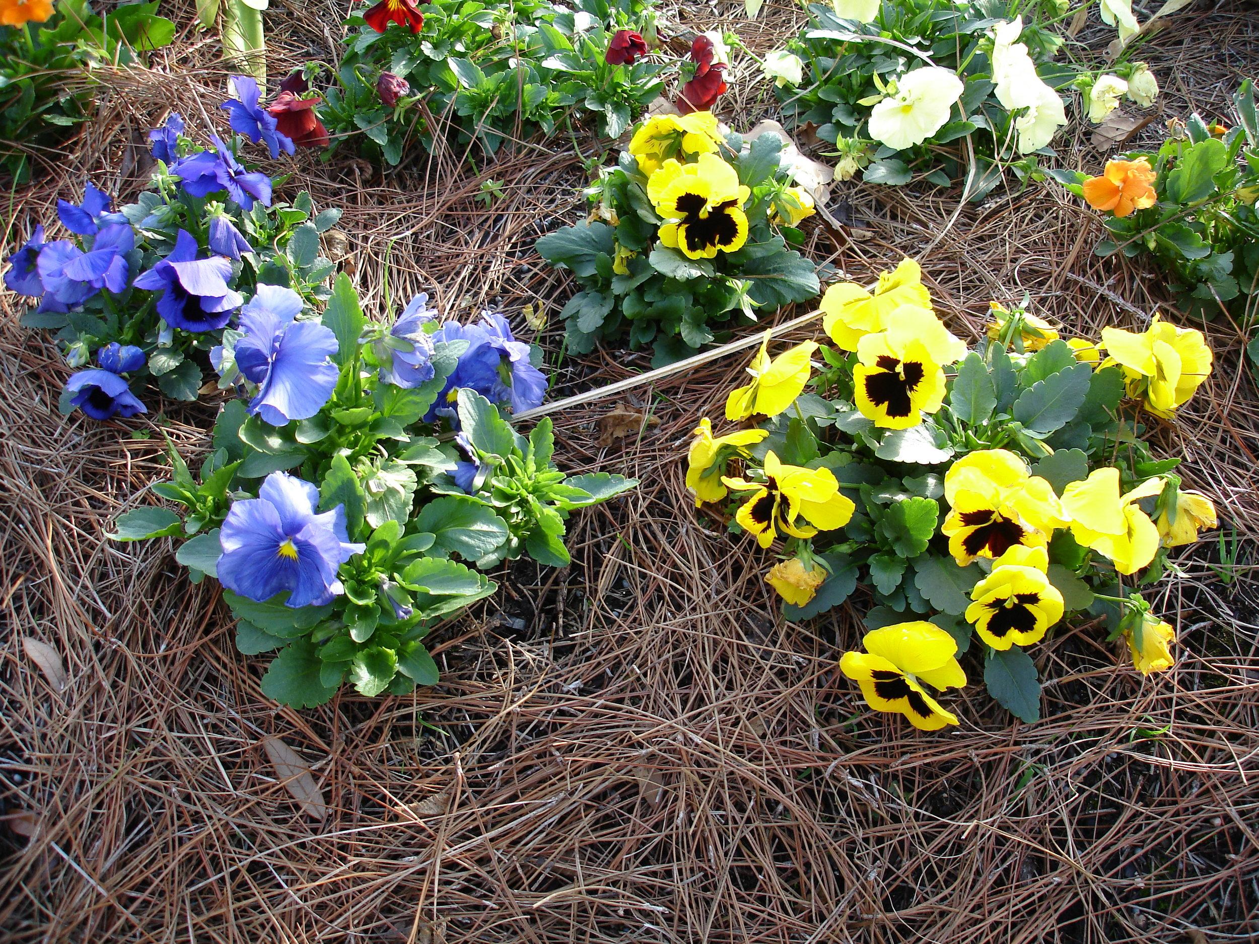 annuals-seasonal-color-baton-rouge-area (1).jpg