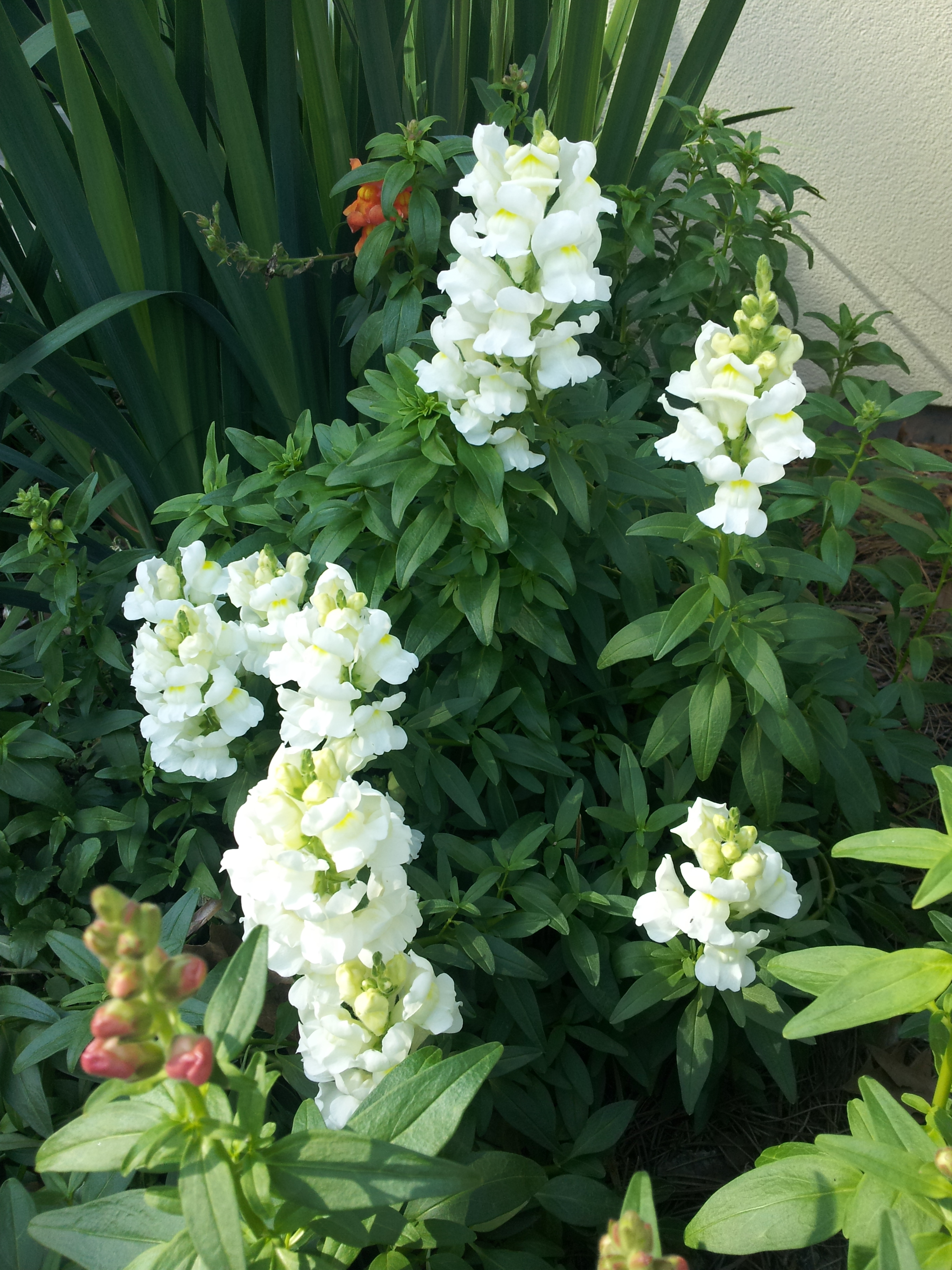 annuals-seasonal-color-baton-rouge-area (2).jpg