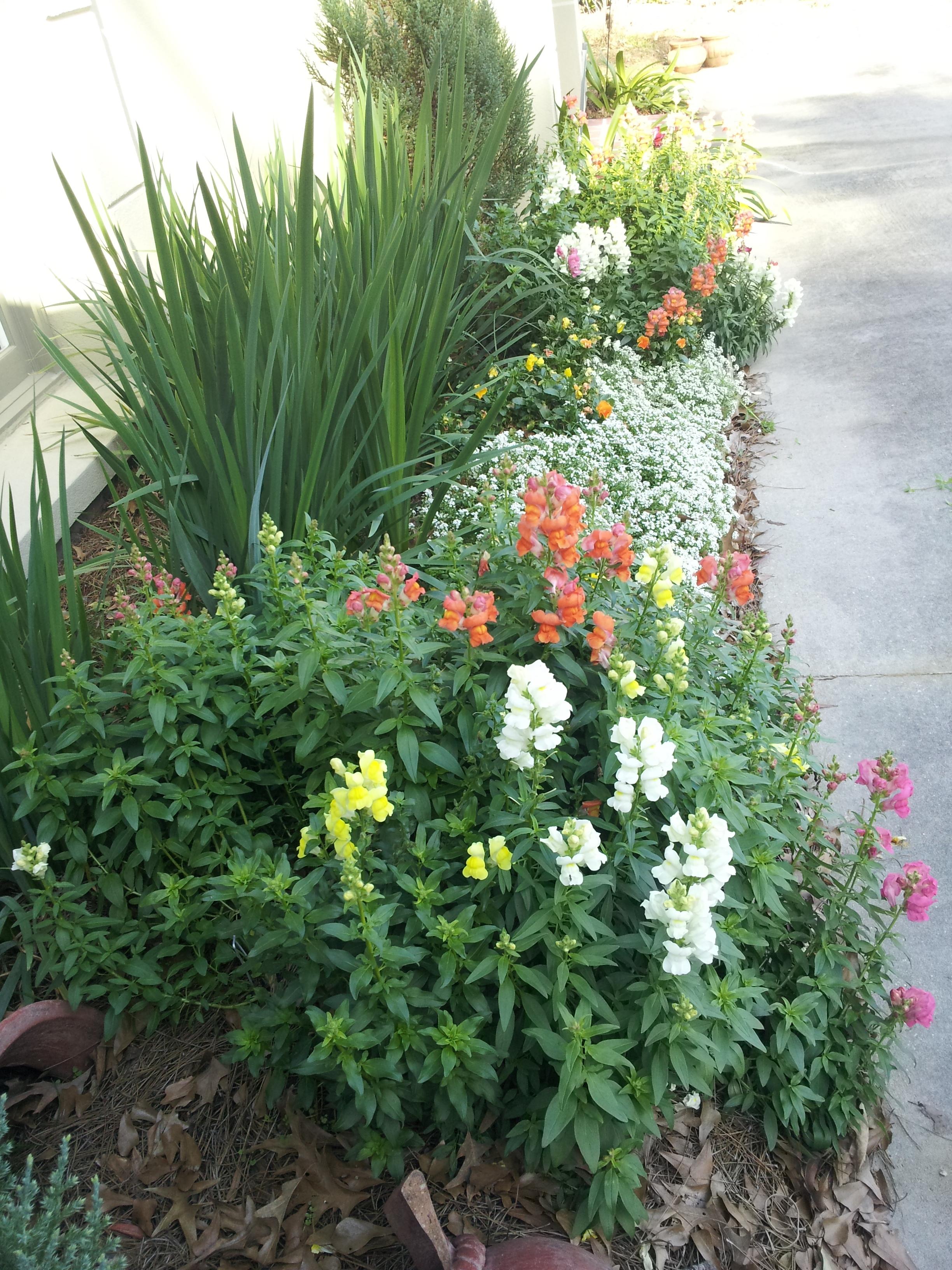 annuals-seasonal-color-baton-rouge-area (3).jpg
