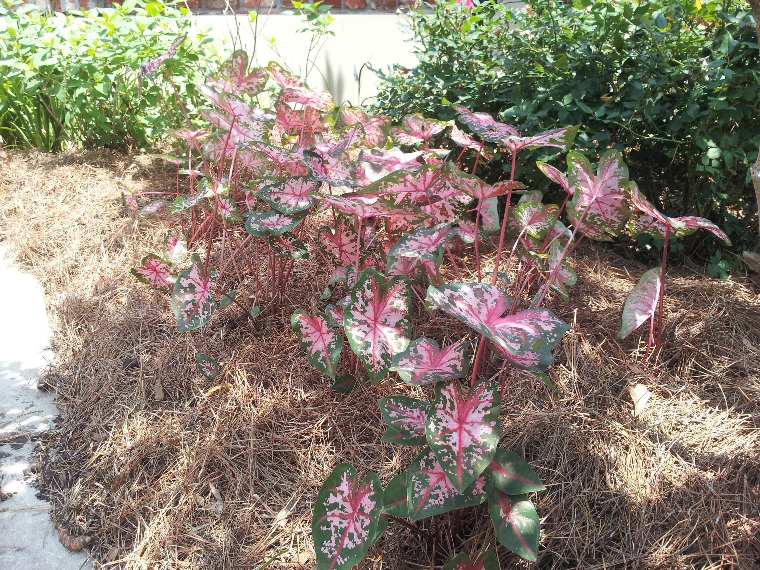 annuals-seasonal-color-baton-rouge-area (6).jpg