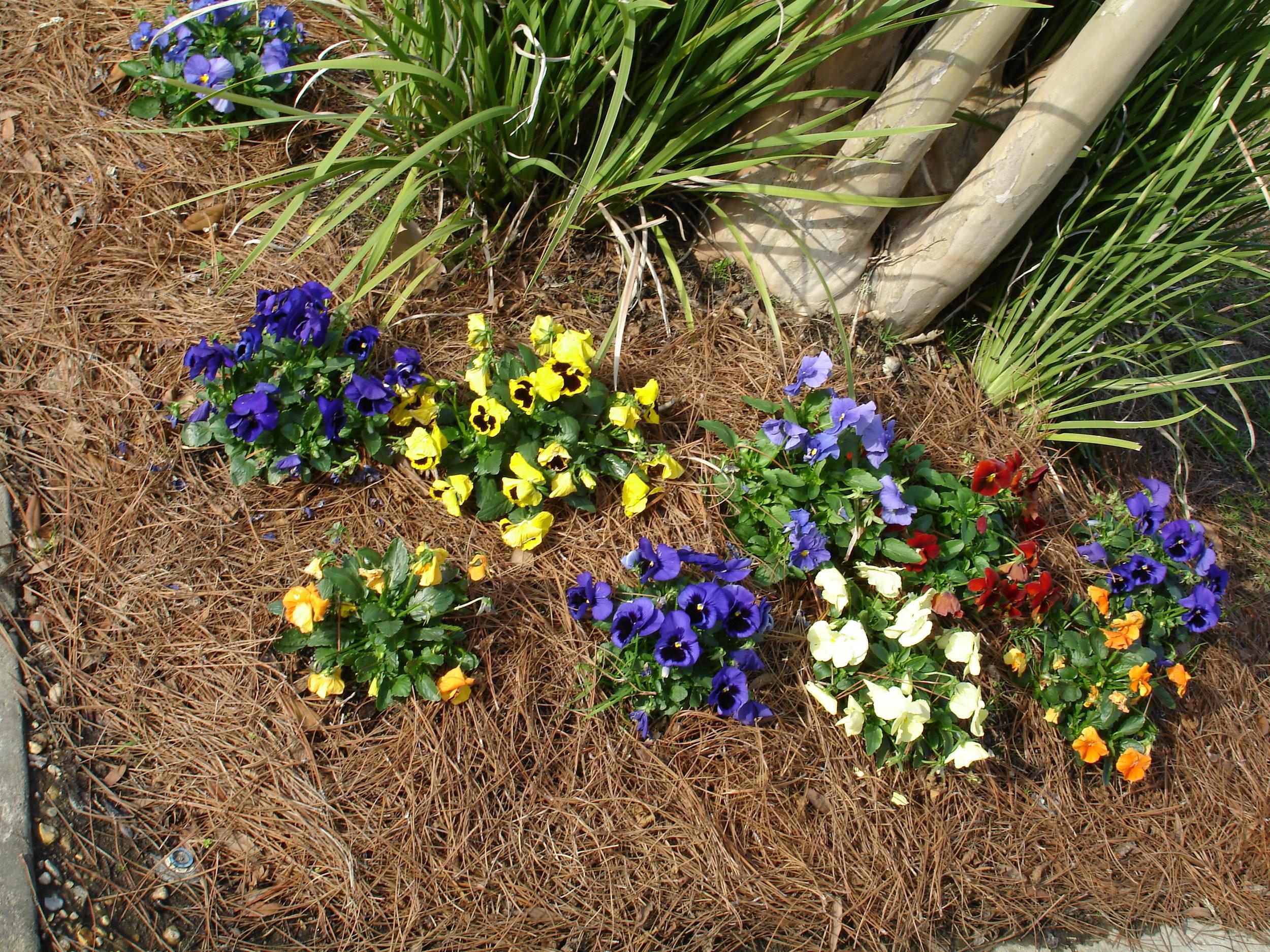 annuals-seasonal-color-baton-rouge-area (19).jpg