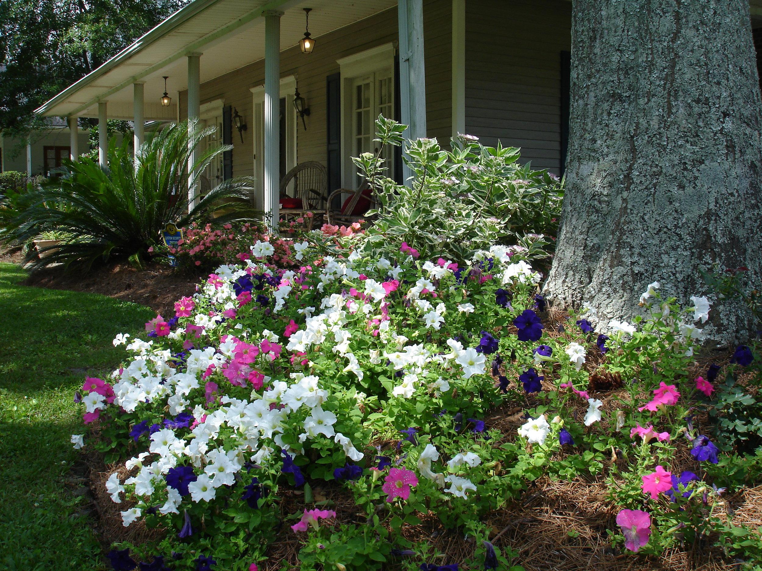 flowerbed-maintenance-seasonal-color-baton-rouge-area (7).JPG