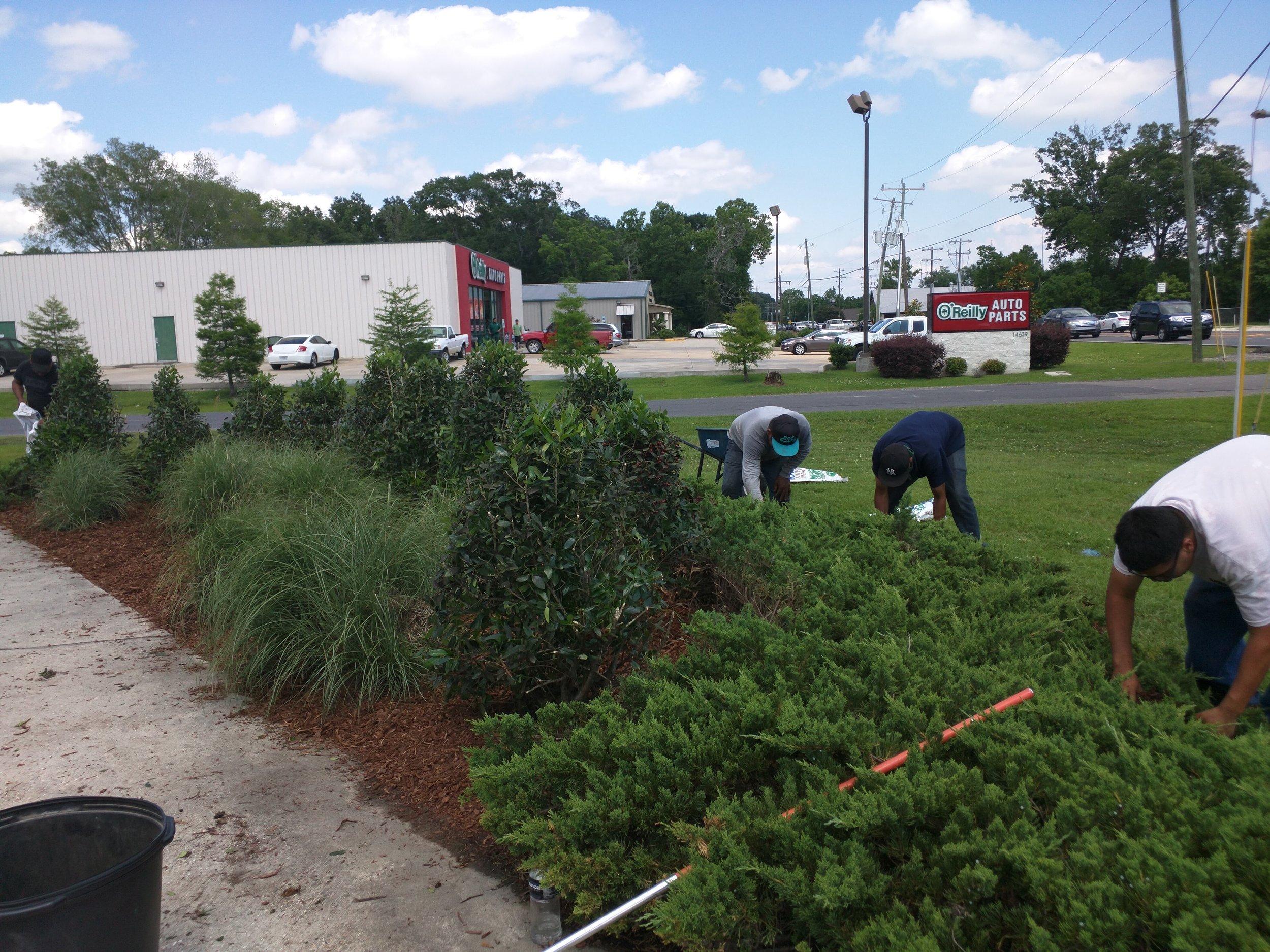 mulch-weeding-baton-rouge-area.jpg